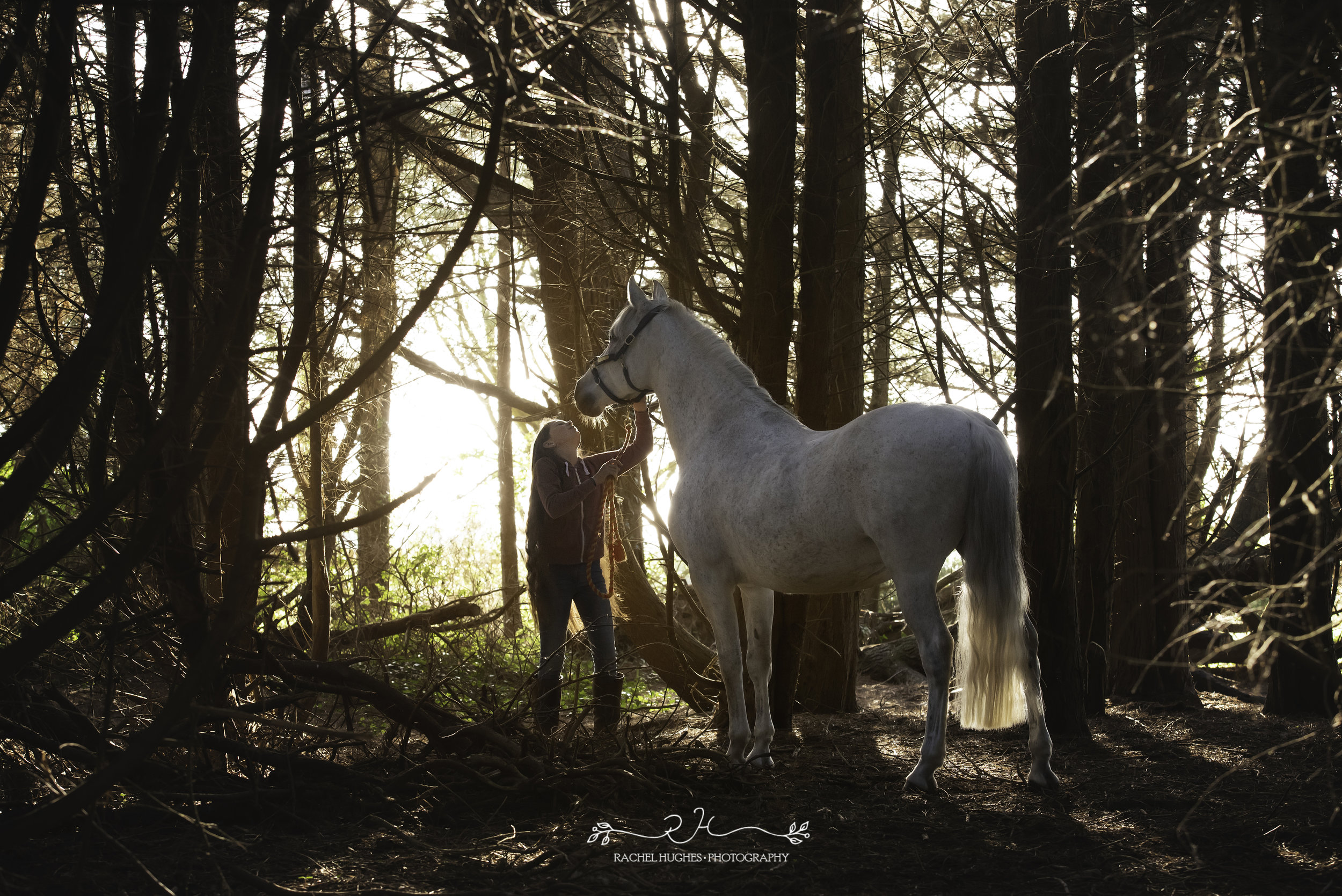 Jersey photographer - girl and horse in sunset forest