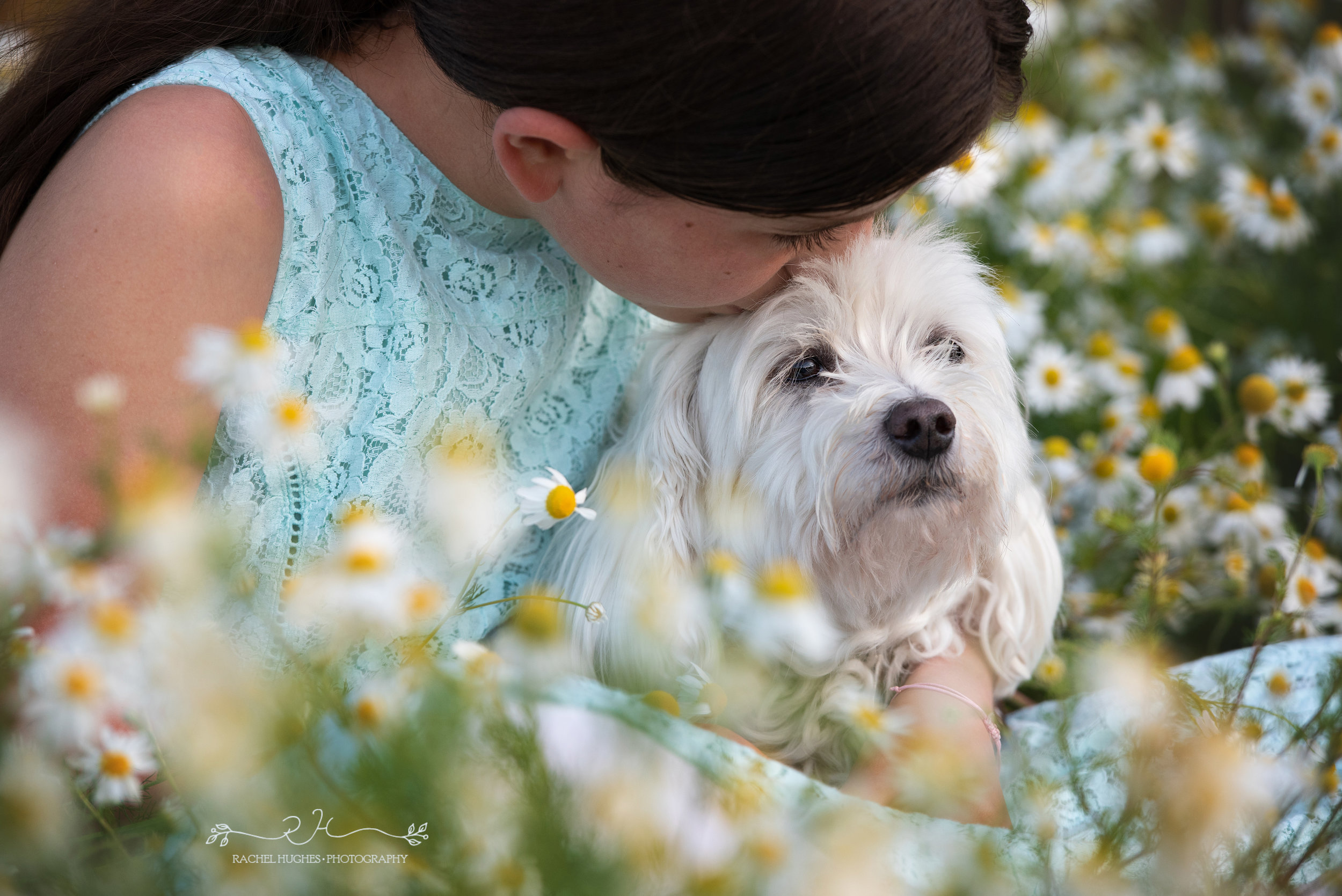 Jersey photographer - rescue dog photoshoot