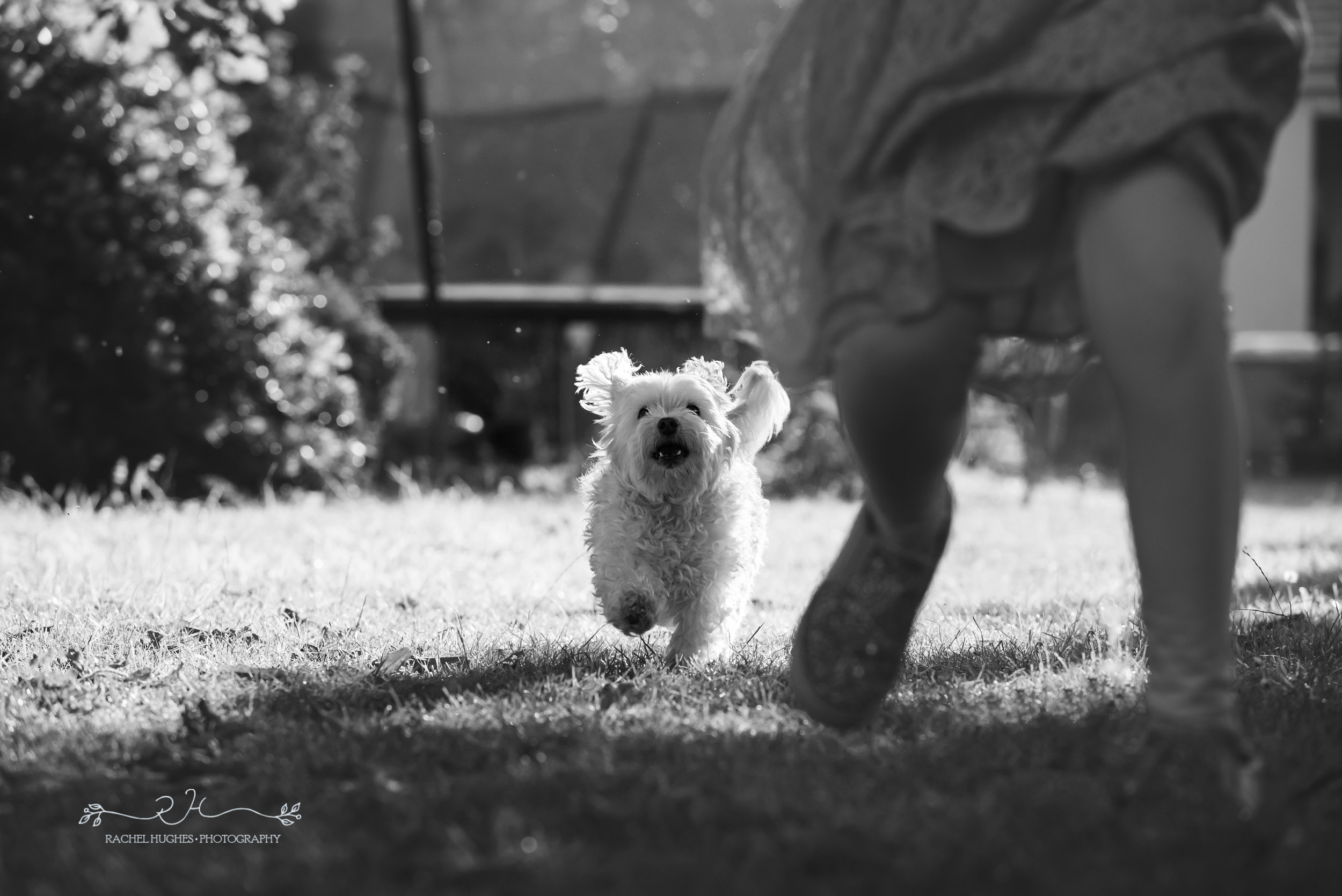 Jersey photographer - dog running after girl in garden