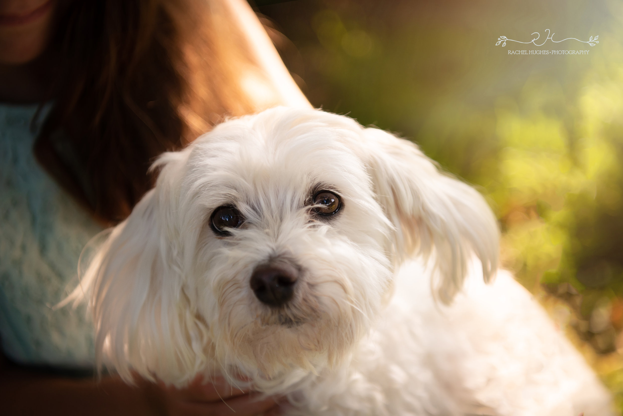 Jersey photographer - rescue dog portrait