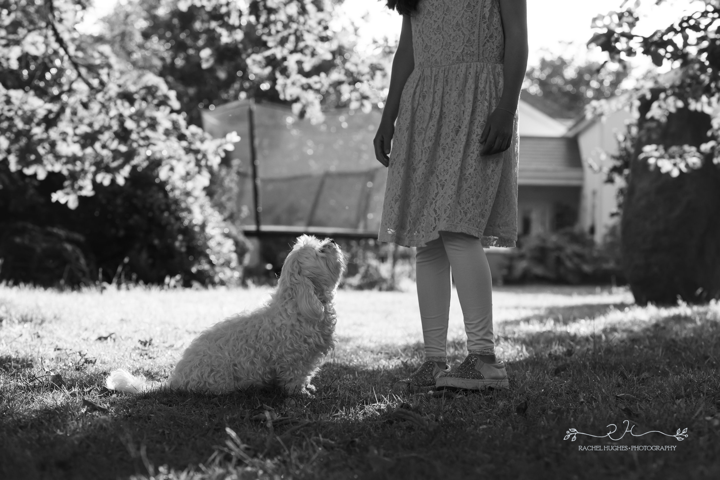 Jersey photographer - dog looking up at girl