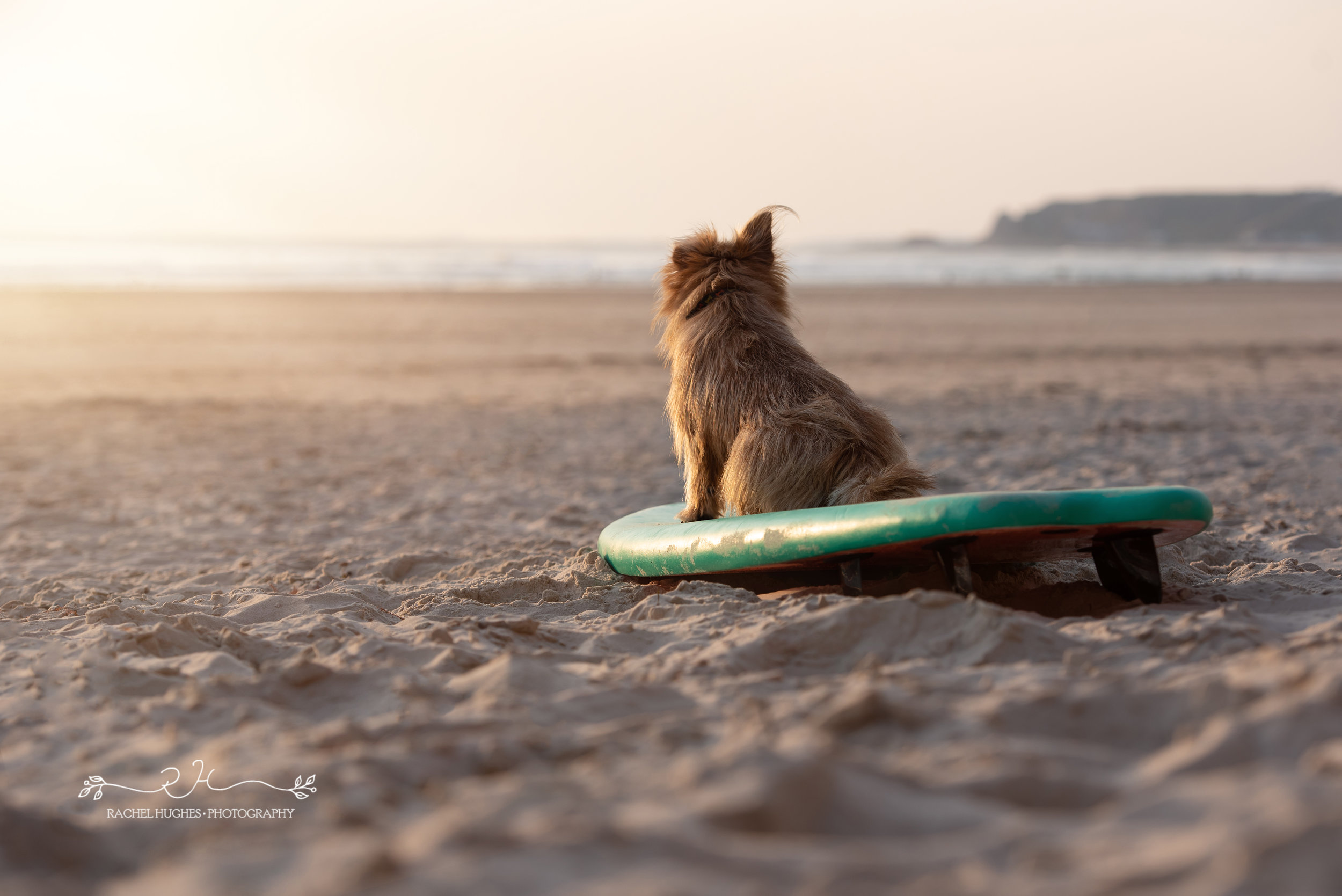 Jersey photographer - pup on surfboard at sunset