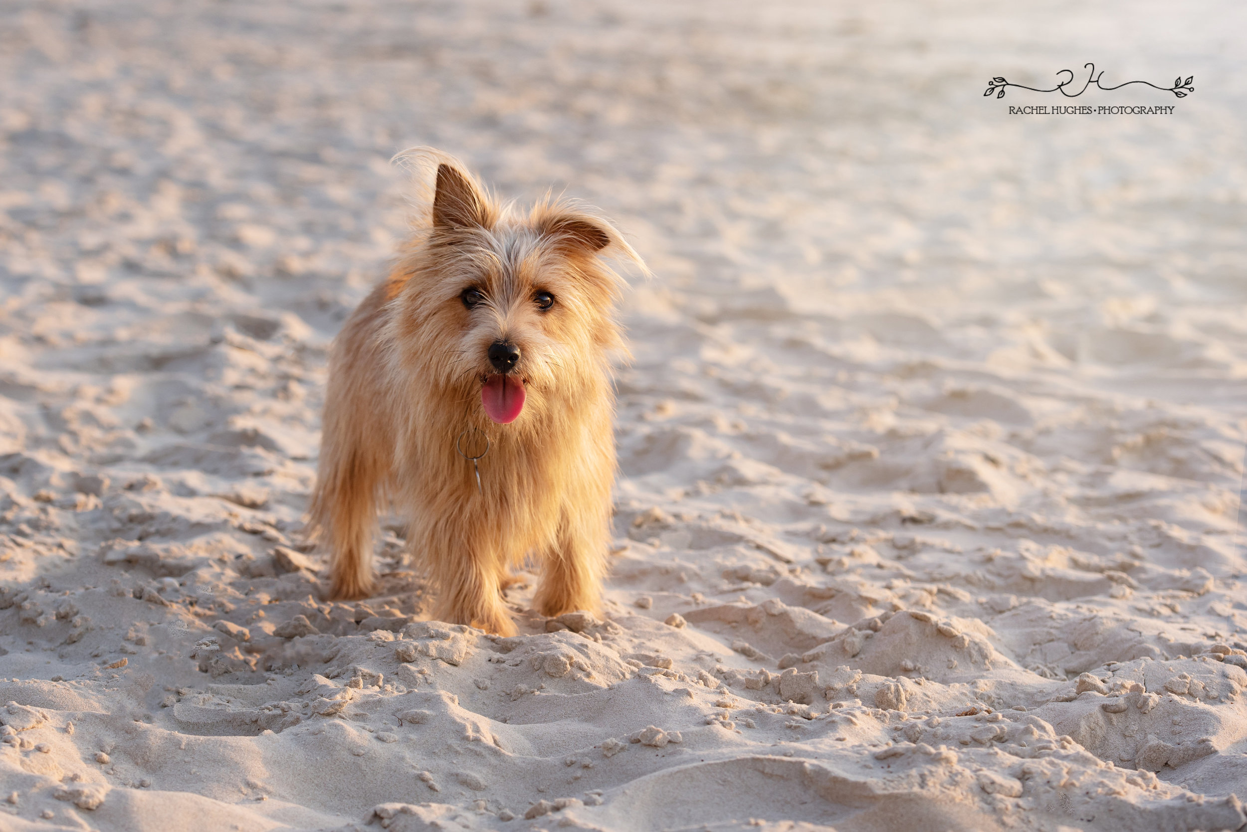 Jersey photographer - pup on beach at St Ouens