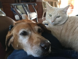 "DOROTHY - ""THE REDBONE COONHOUND IS 13 AND COLBY THE X FERAL KITTEN IS 5."""