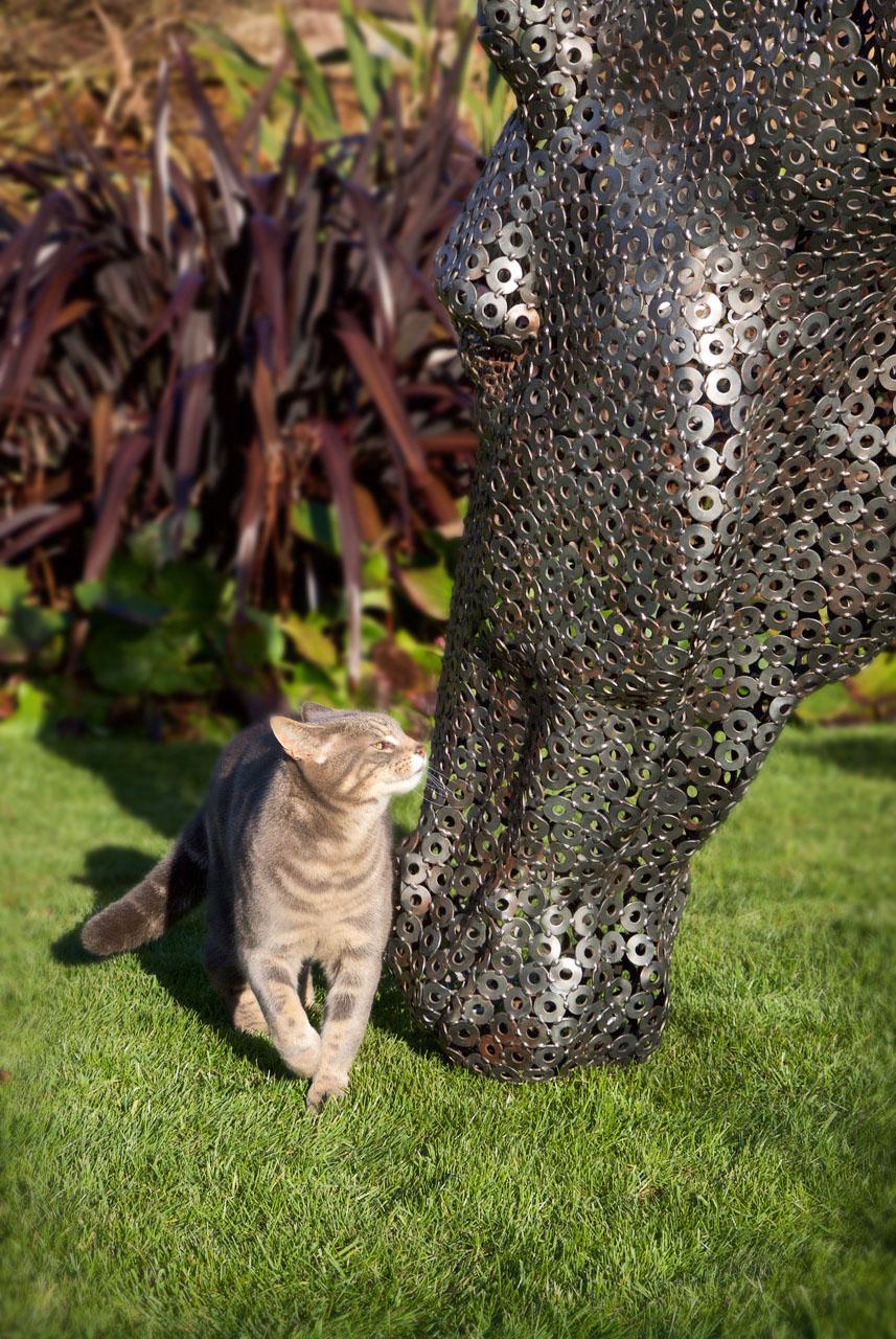 4. Image-cat.jpg