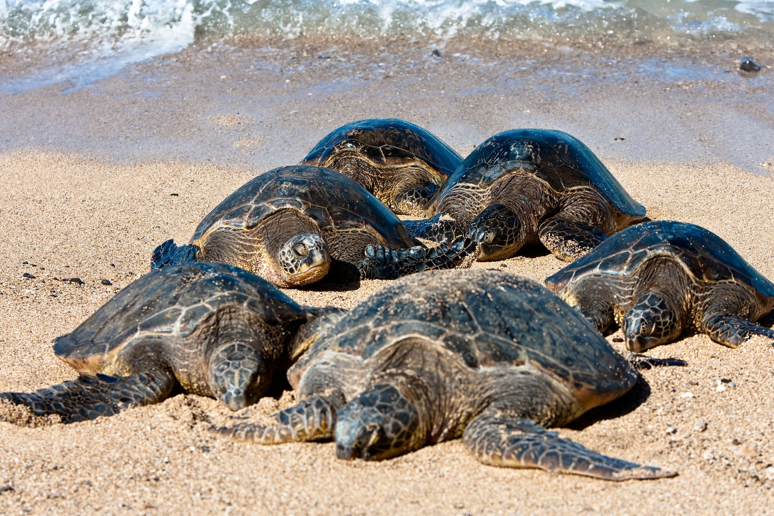 Honu group.jpg