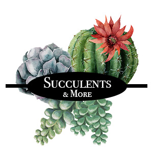 Category-Buttons_SUCCULENTS_300x300.jpg