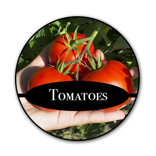 tomatoes_text.jpg