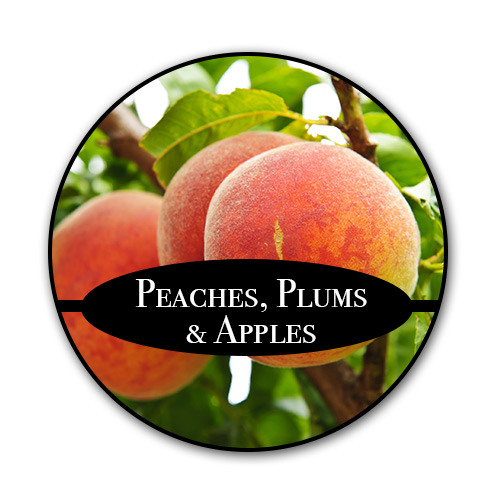 peaches_text.jpg