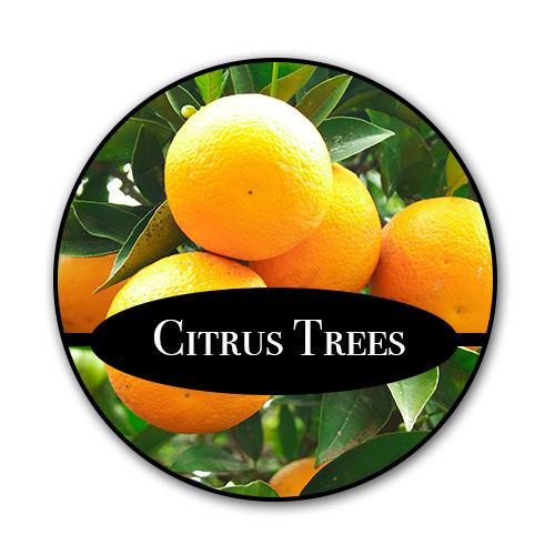 citrus_text.jpg