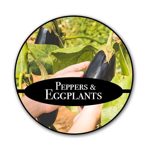 peppers-eggplants_text.jpg