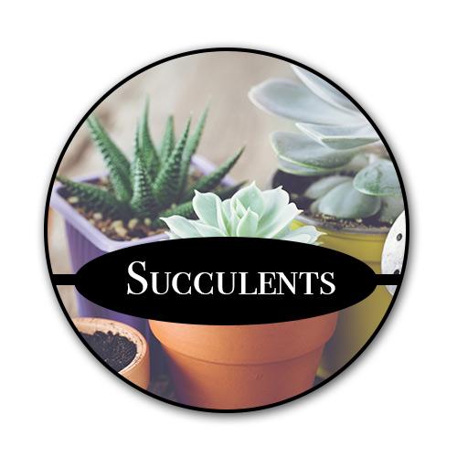 succulents_text.jpg