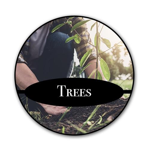 tree_text.jpg