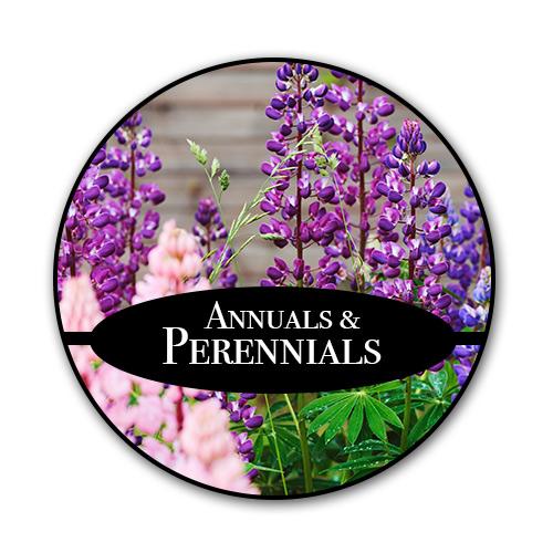 perennials_text.jpg