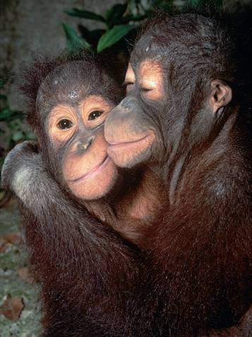 8. Kindness (no monkey-business). -