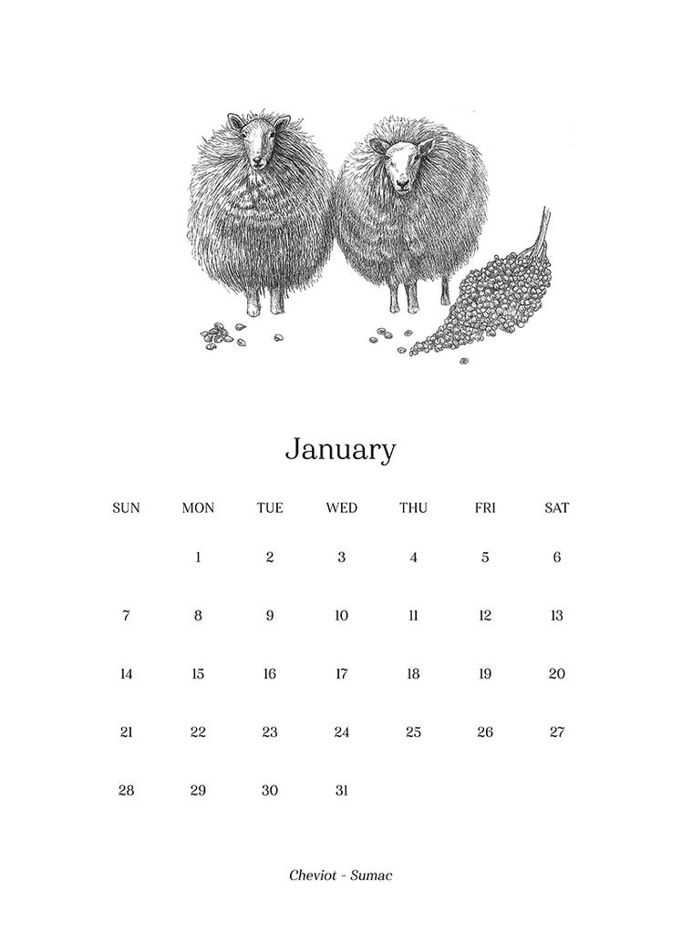 Sheep_Calendar_2018_final3_1024x1024.png