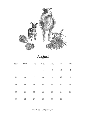 Sheep_Calendar_aug.png