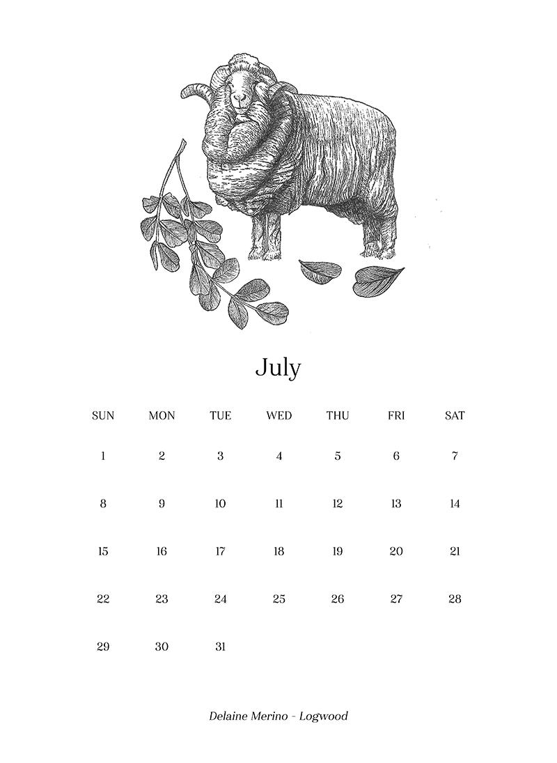 Sheep_Calendar_july.png