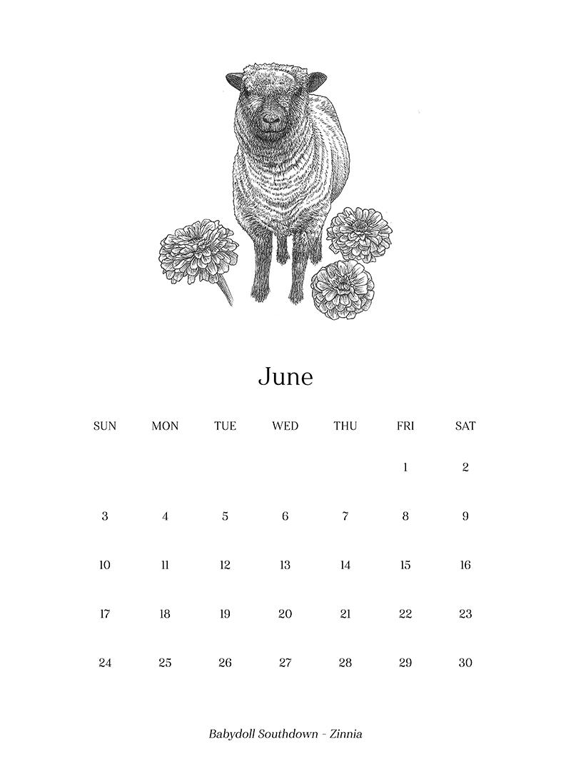 Sheep_Calendar_june.png
