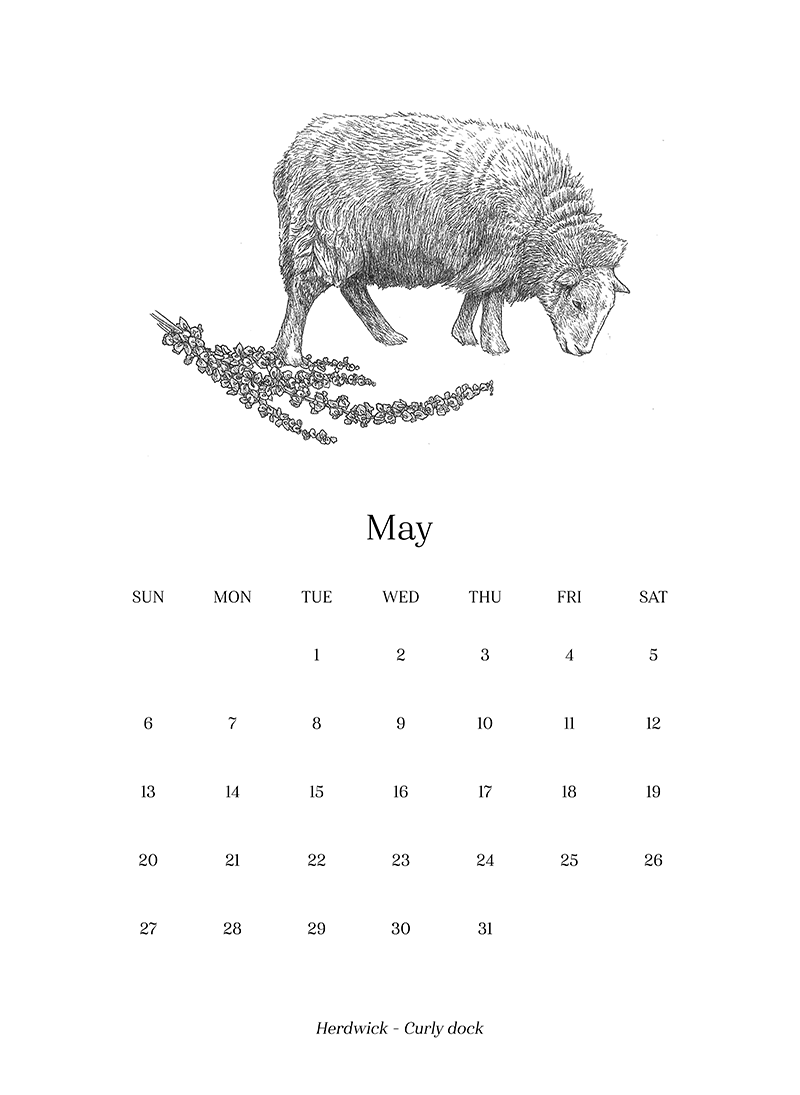 Sheep_Calendar_may.png