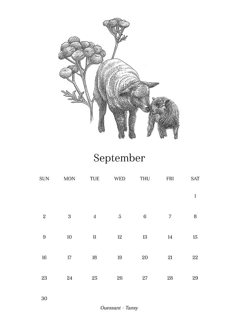 Sheep_Calendar_sept.png