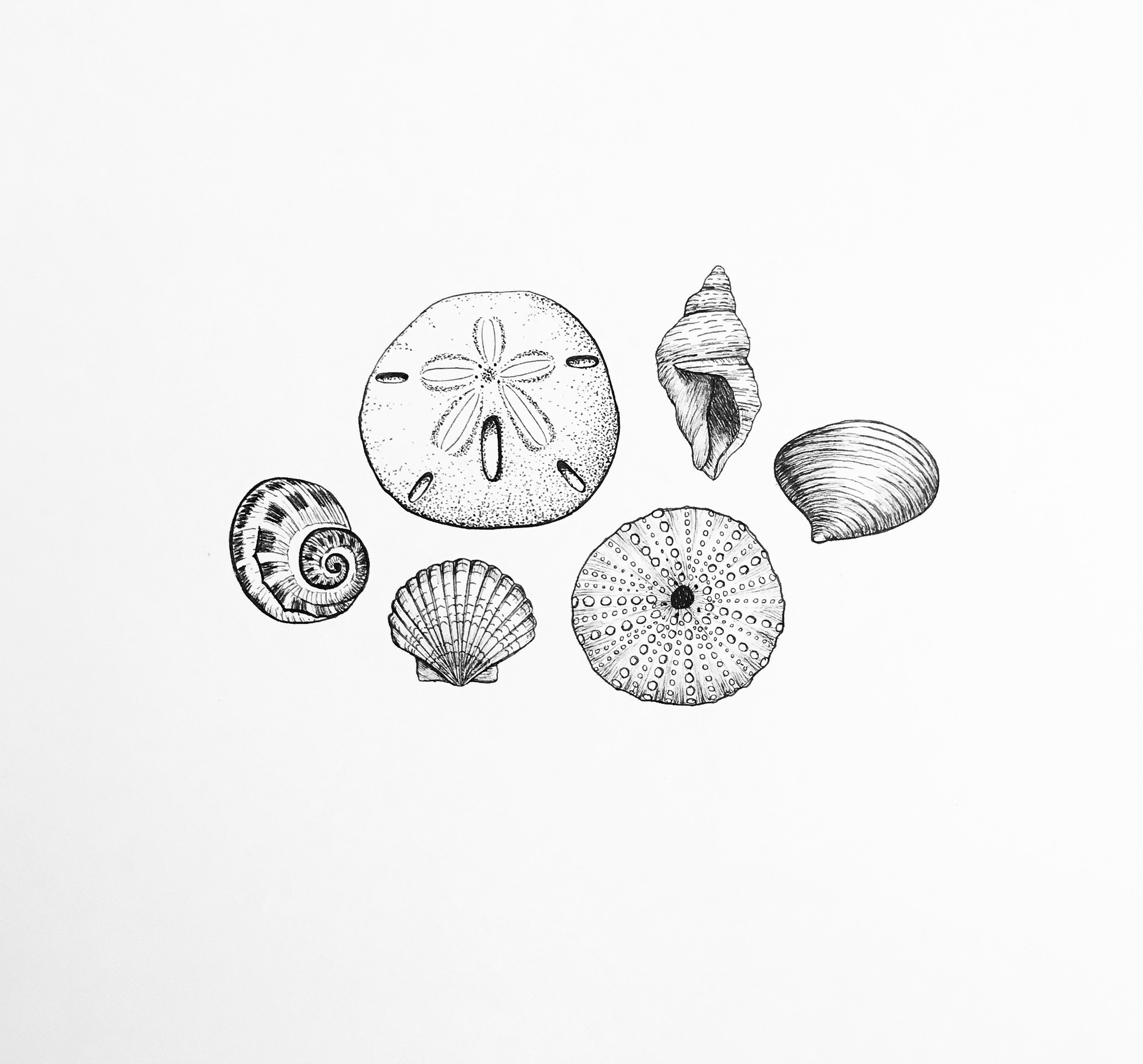 seashells.JPG