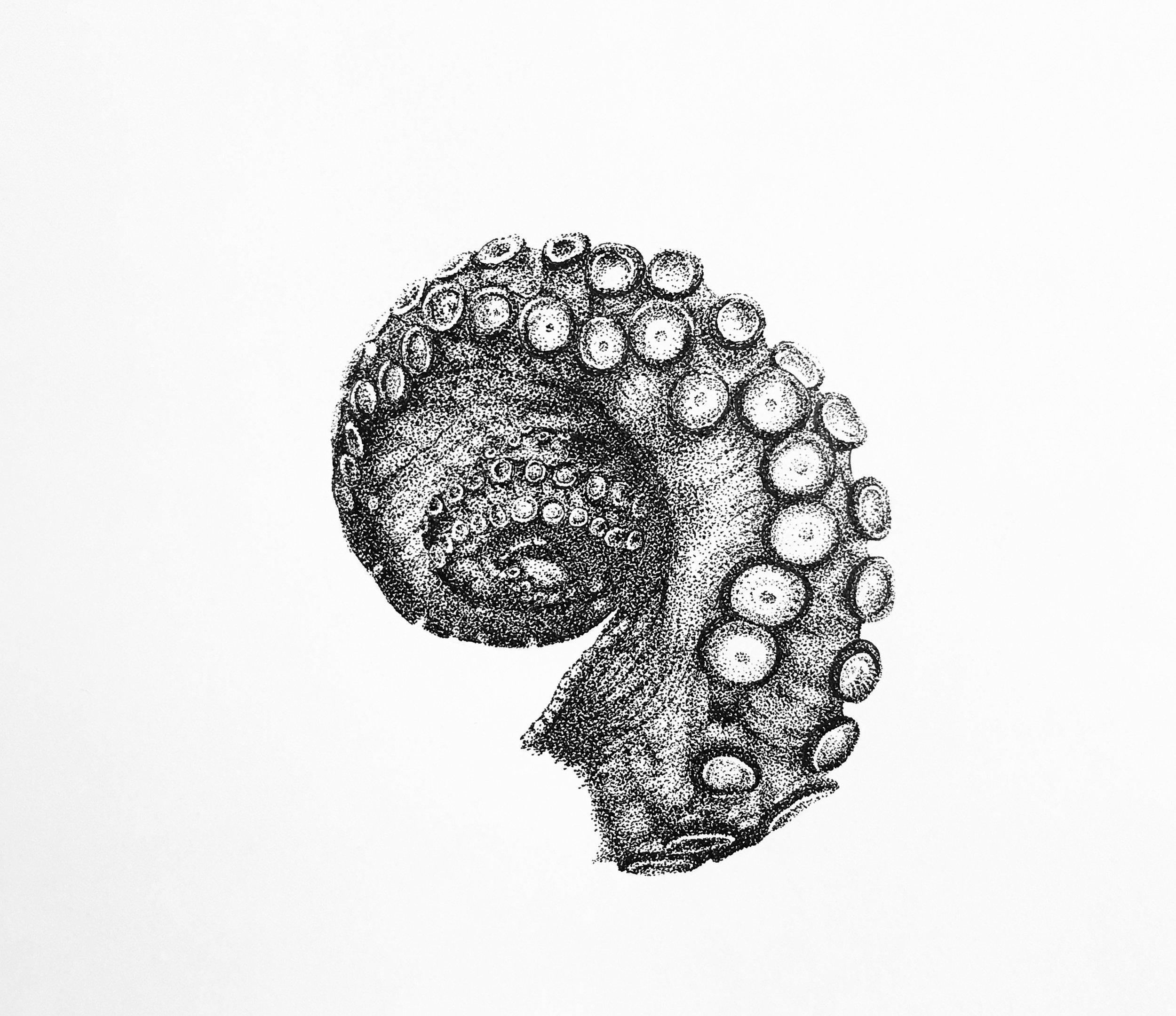 tentacle.JPG