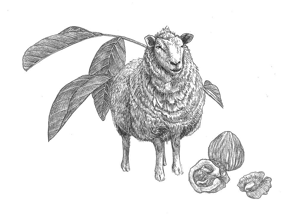 woolful sheep scans 12.jpg