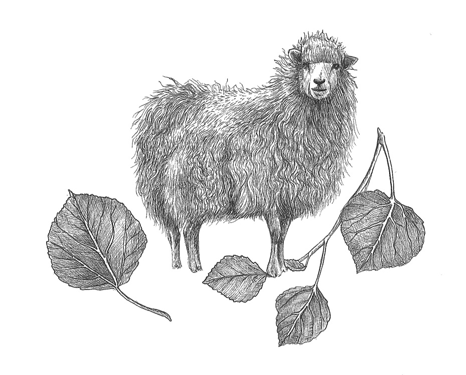 woolful sheep scans 9.jpg