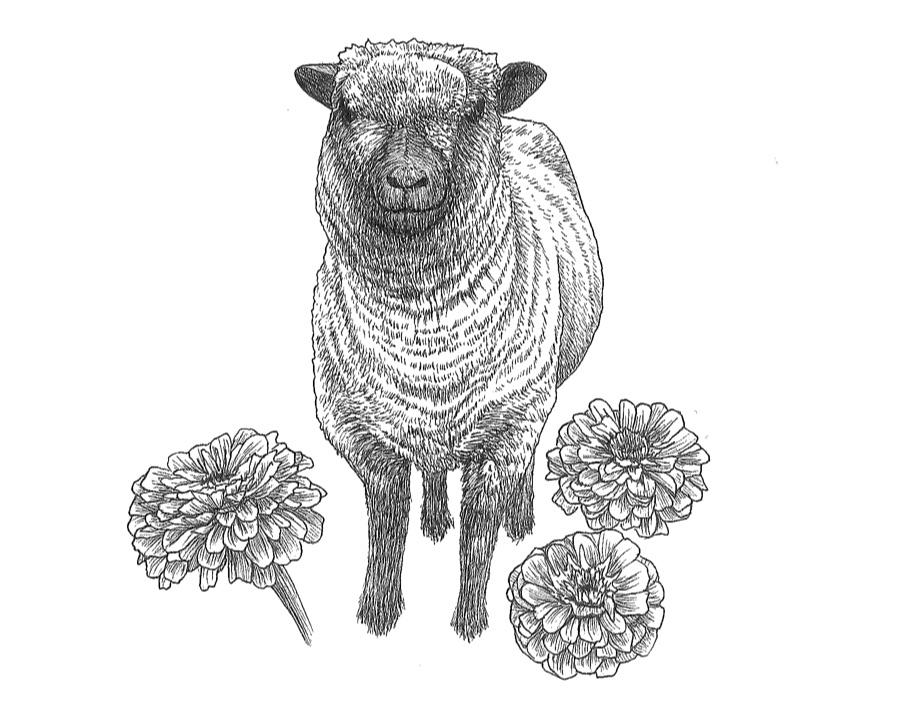 woolful sheep scans 6.jpg
