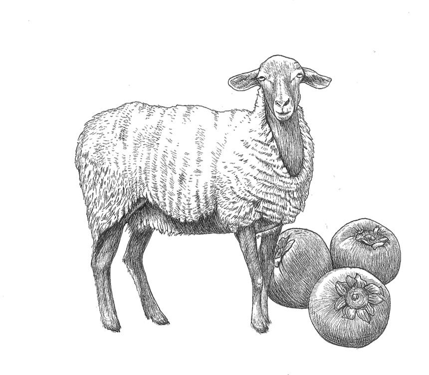 woolful sheep scans.jpg