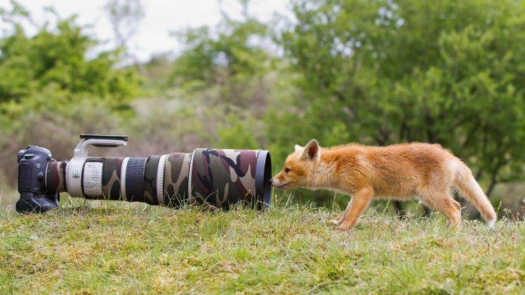 https://wallup.net/nature-animals-wildlife-fox-camera-lens-camouflage-grass-trees-landscape-telephoto-lens-canon-depth-of-field-baby-animals/