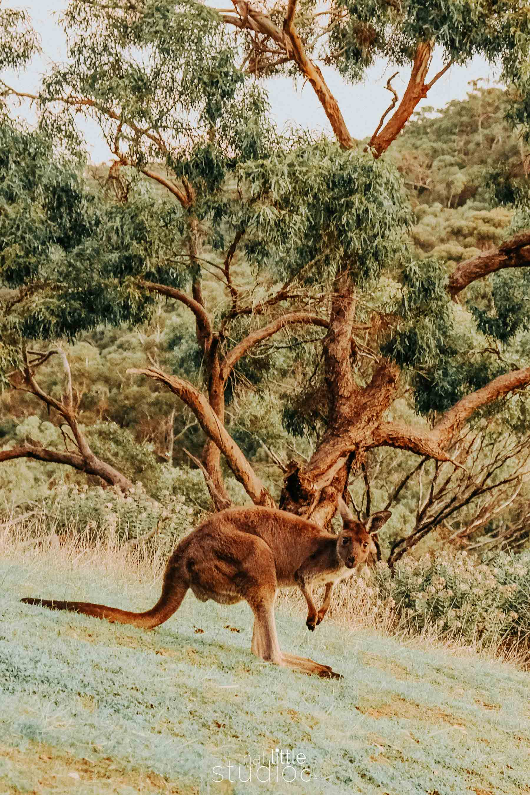 Morialta National Park Adelaide, South Australia