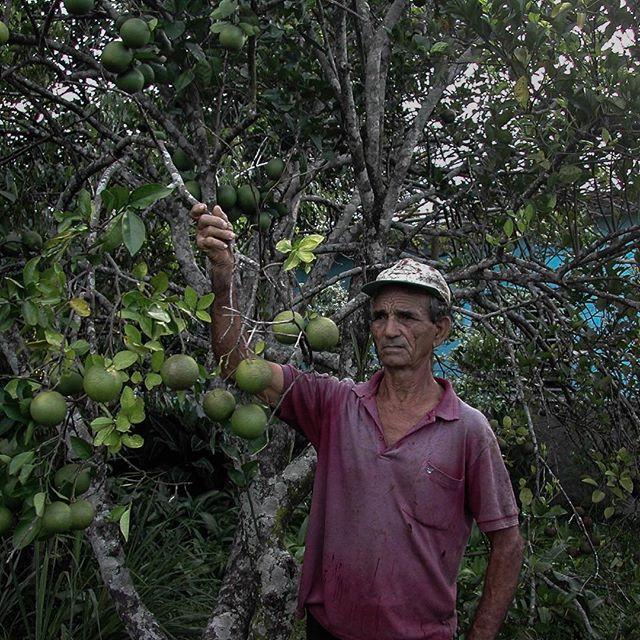 Surrounded by #grapefruit #hacediezaños #ruralcuba #gardens #toronja #citrus #farmers #skeptical