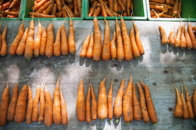 "Carrots after agricultural assessment by ""Zukunftsstiftung Landwirtschaft"". Photo: Hendrik Rauch"