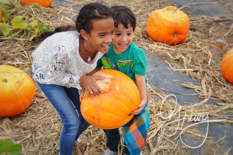 Greivy.com Hamptons Pumpkin Picking - 8.png