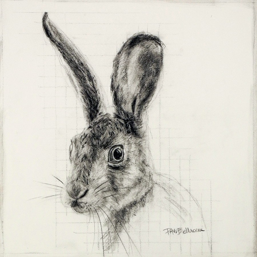 "Hare, 12""x12"""