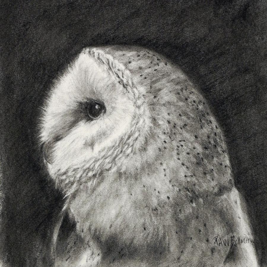 """Barn Owl, 12"""" x 12"""""""