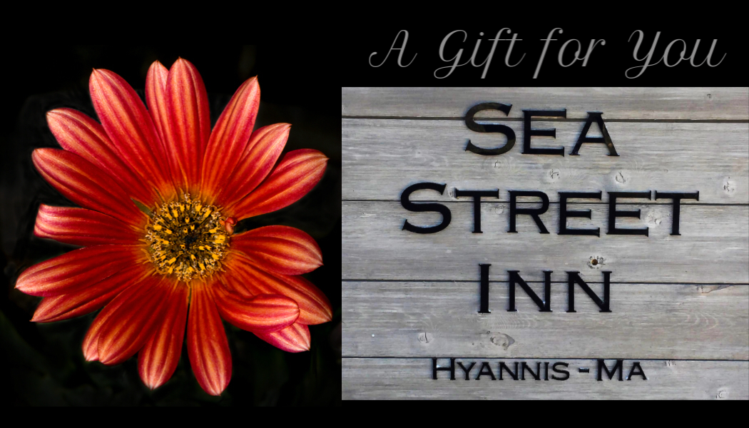 "Sea Street InnGift Certificates - Give the gift of an experience that fills the senses and creates lasting memories of a visit to Sea Street Inn in Hyannis, Cape Cod.Our bed and breakfast gift certificates are perfect for any holiday or special occasion, or just a thoughtful way to say ""thank you"".Gift certificates are a good for any room on any night, subject to availability. Please be sure to review our policies regarding minimum stays, cancellations, guest age requirement, etc.To purchase your gift certificate CLICK HEREor call us at (508) 360-6389"