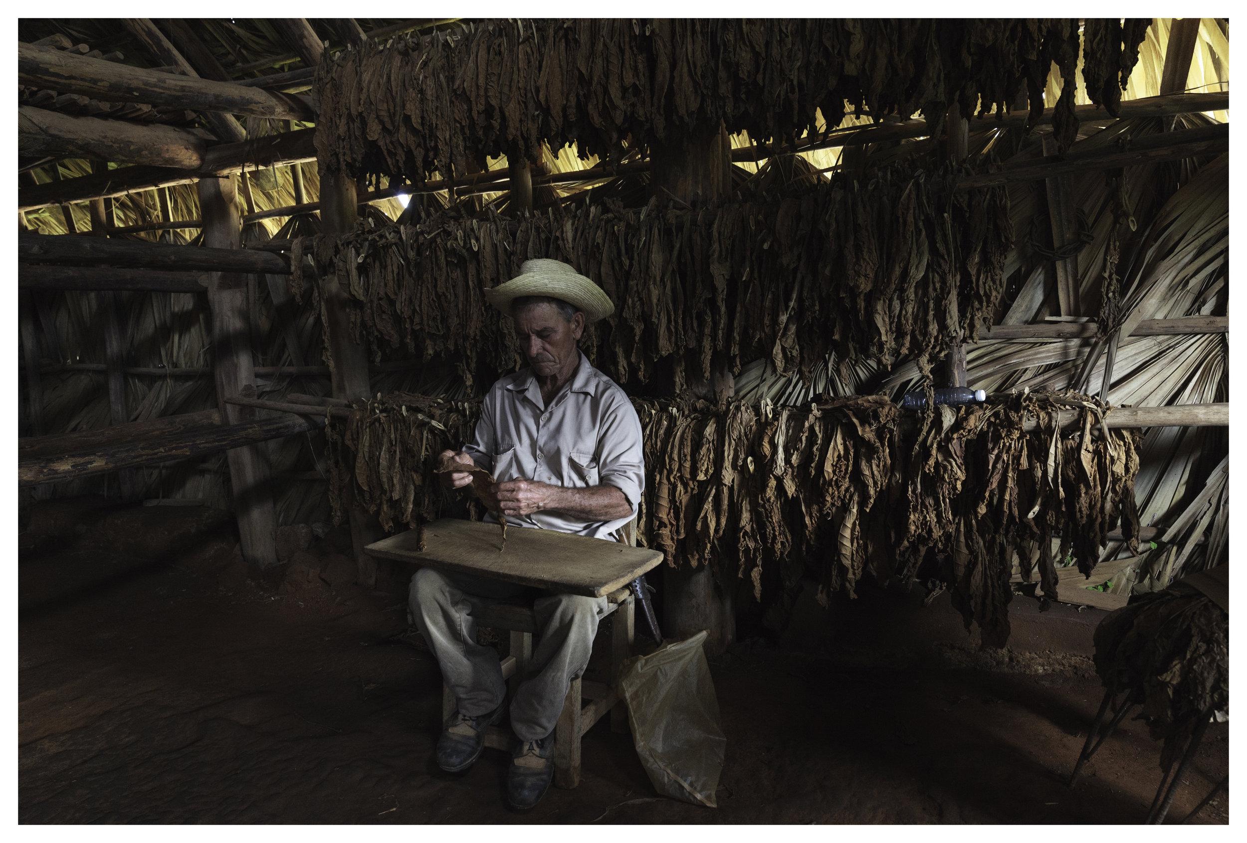 Benito Carnejo Nodarse, tobacco farmer of Benito Farms  1/60 f/5.0 ISO 2000 at 24mm