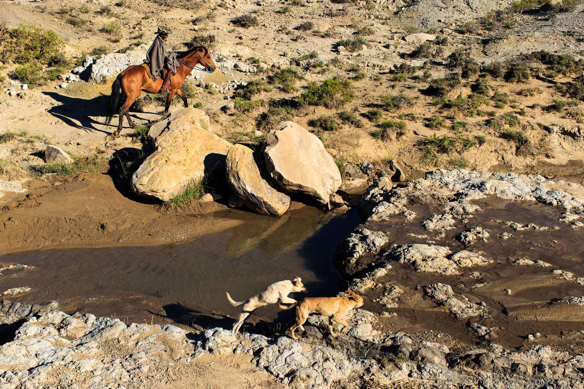 African Cowboys-1.jpg