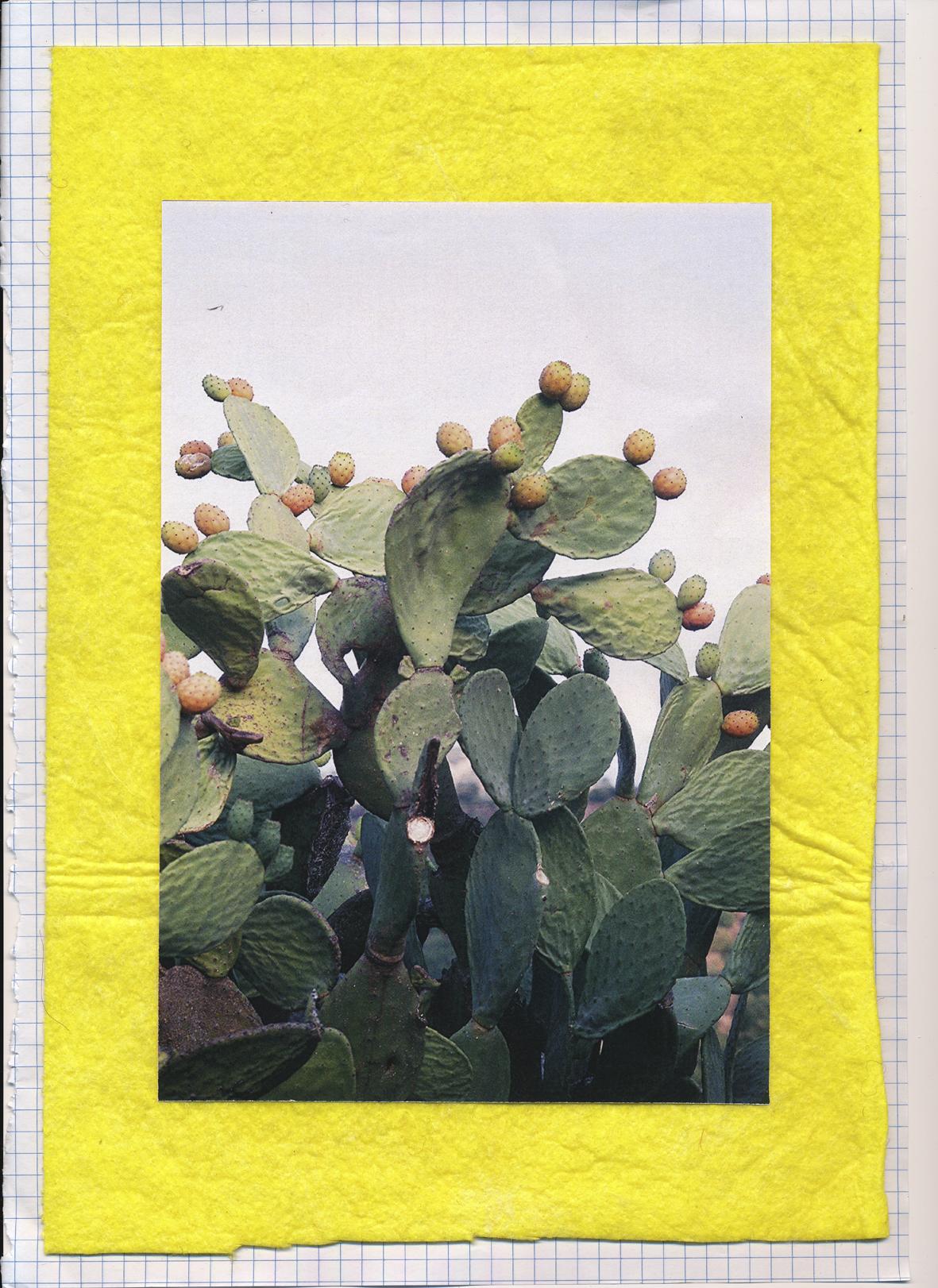 Cactus +01.JPG