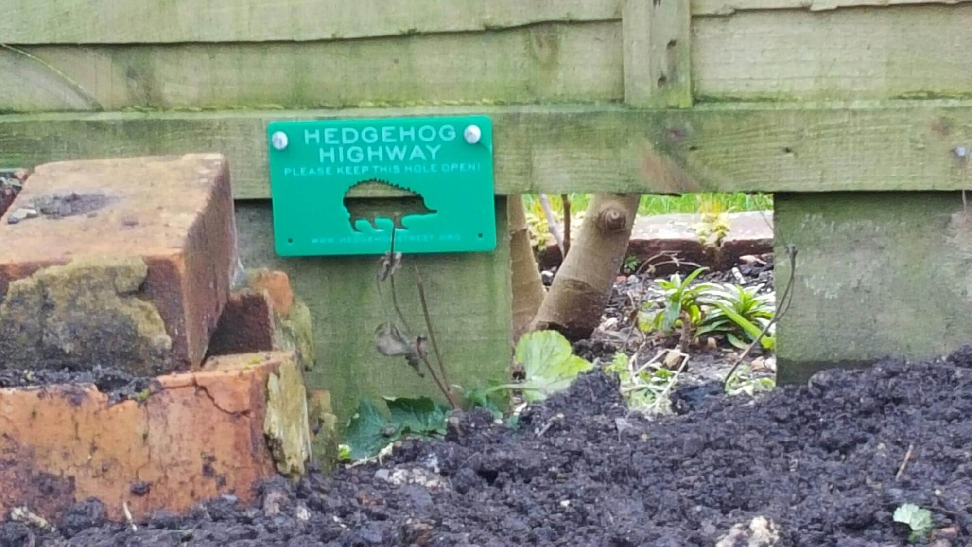 hedgehog highway 1.jpg