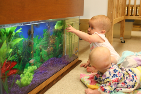 Brenda Eden - Infant Room on the Floor AquariumRecently I added a thirty gallon floor aquarium to my infant room. I chose a floor aquarium so infants can enjoy watching the fish during tummy time. The infants, parents, and co-workers have been so excited to see the progress of this huge aquarium! Our local newspaper, The Janesville Gazette, wrote a very nice article about my winning the TLLCCF award. They also included a picture of the infants watching the fish in the aquarium. That great article has sent many prospective parents to our center for a tour. These parents always have a positive comment about our beautiful aquarium.