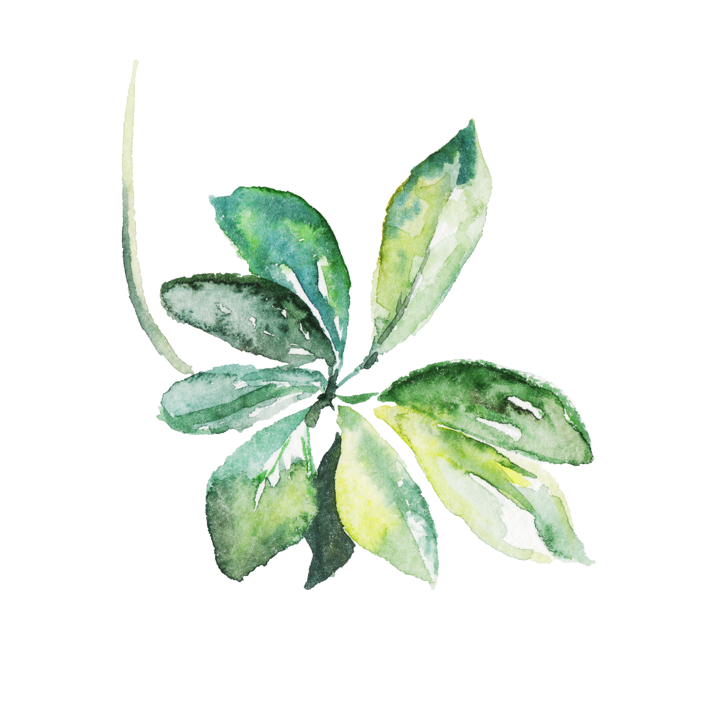 leaf 33.png