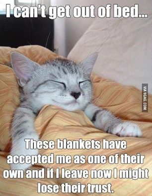 Cat in Bed.jpg