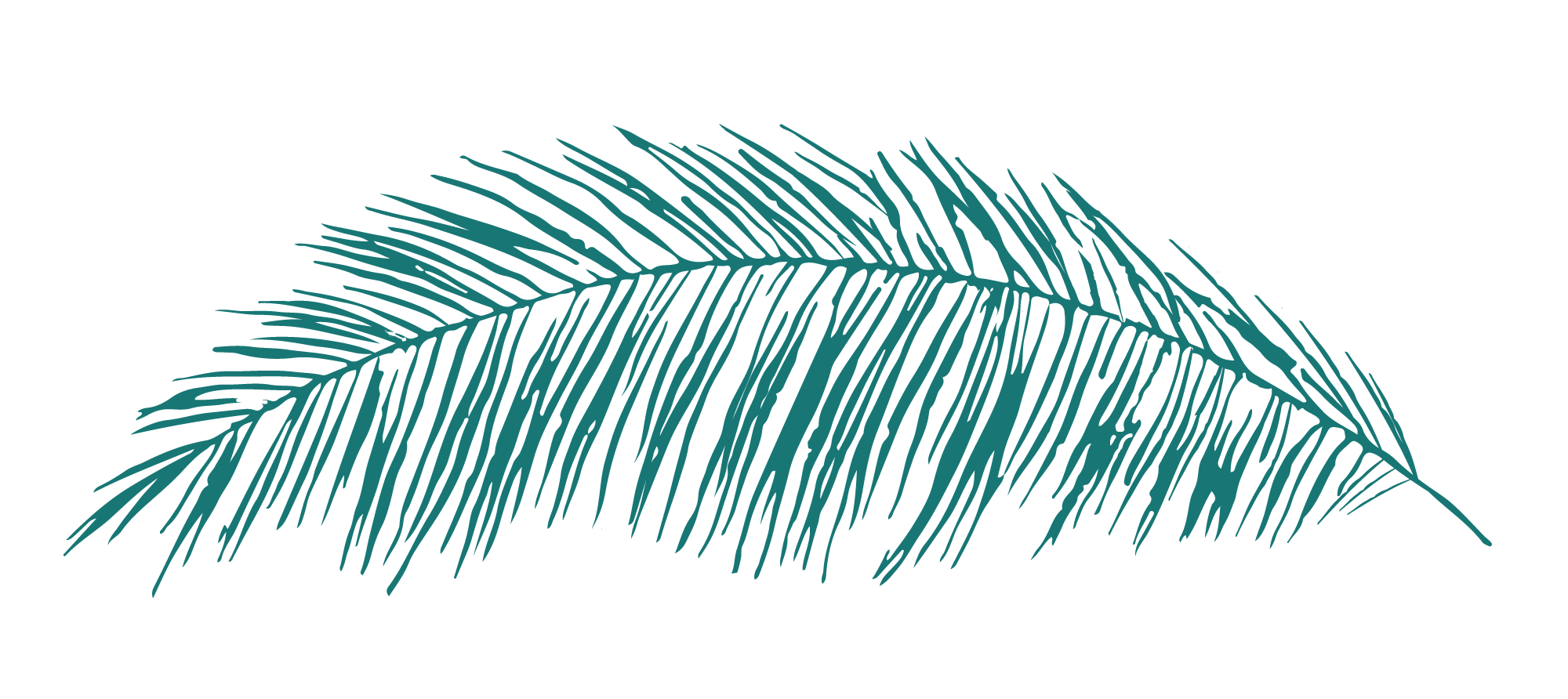 C+CT_Leaf_Palm_RGB.png