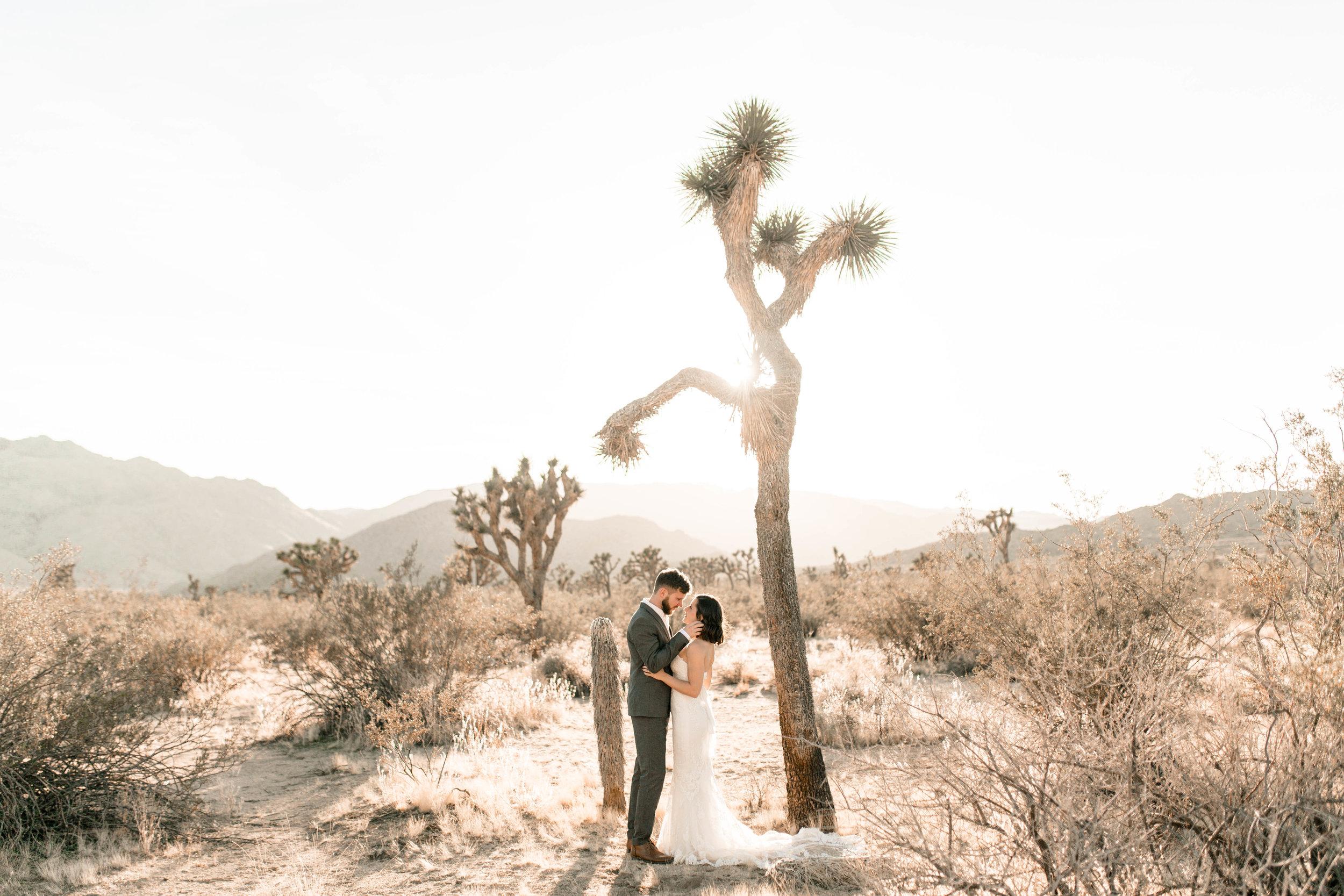 nicole-daacke-photography-joshua-tree-adventurous-elopement-wedding-national-park-wedding-photographer-adventure-wedding-adventurous-elopement-jtree-joshua-tree-national-park-wedding-photographer-intimate-weddings-golden-desert-love-1.jpg
