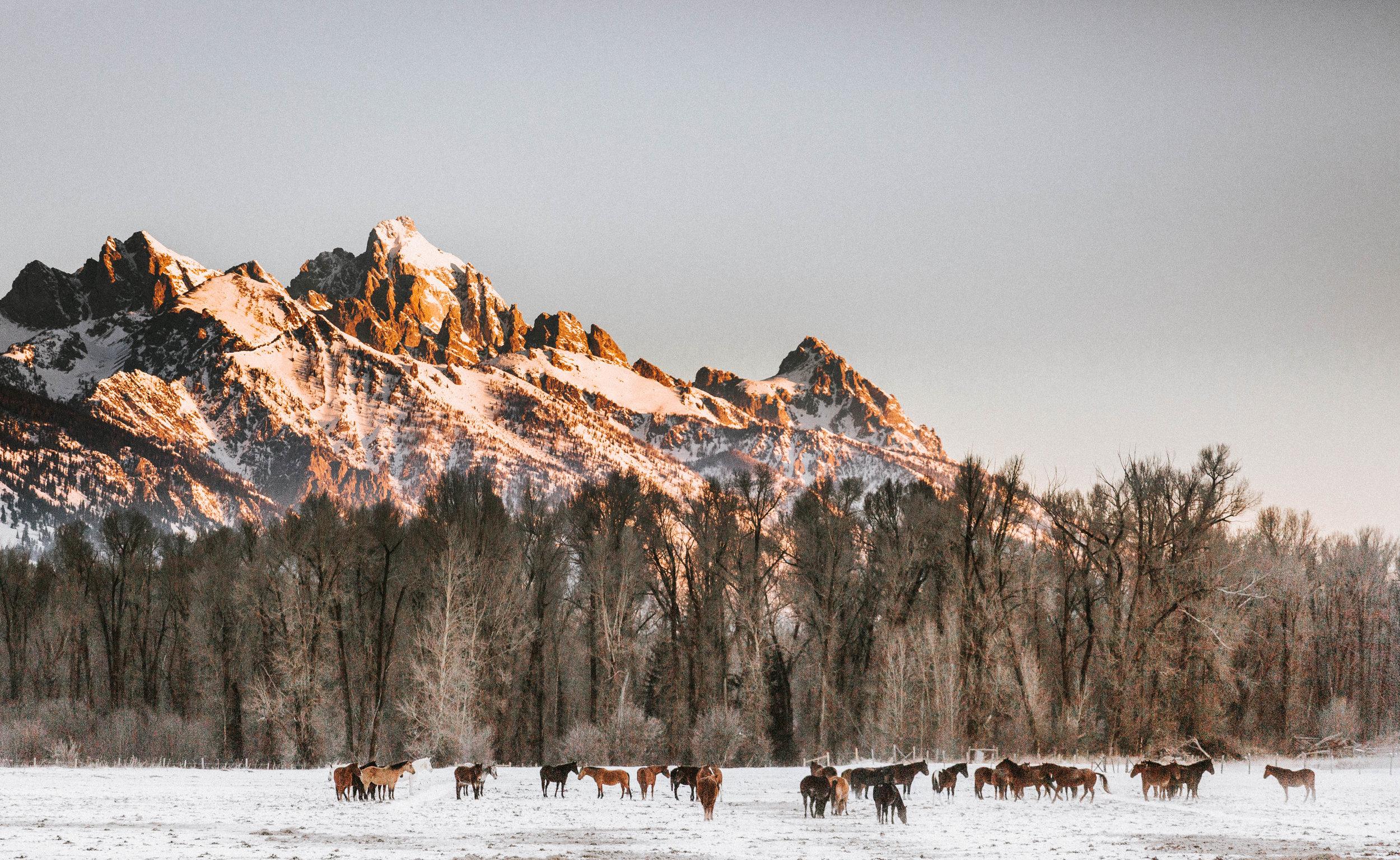 Nicole-Daacke-Photography-Vibrant-Landscape-National-Geographic-Jackson-Hole-Wyoming-grand-tetons-Photography-38.jpg