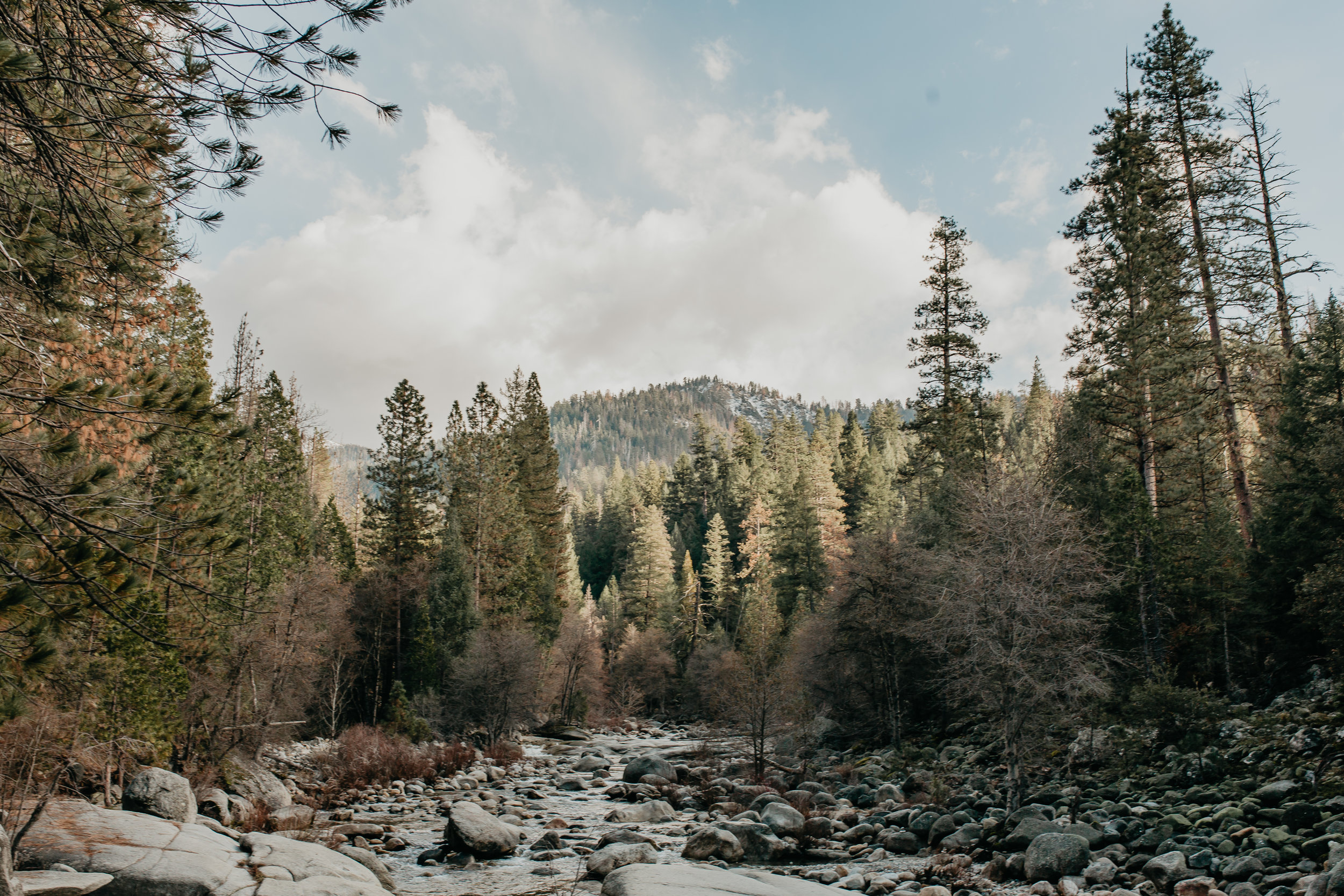 nicole-daacke-photography-yosemite-riverside-adventurous-engagement-photos-in-yosemite-national-park-elopement-photographer-weddings-travel-destination-wedding-eloping-elope-pine-forest-42.jpg